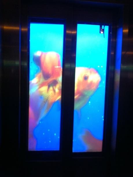 l'ascenseur étrange 4